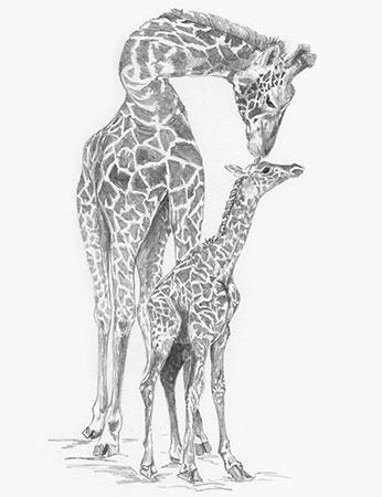 Malen Nach Zahlen Süsse Giraffen