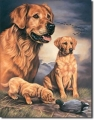 Blechschild - HUNDE - GOLDEN RETRIEVER - GOLDEN EXPERIENCE