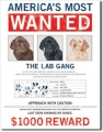Blechschild - AMERICA`S MOST WANTED-THE LAB GANG